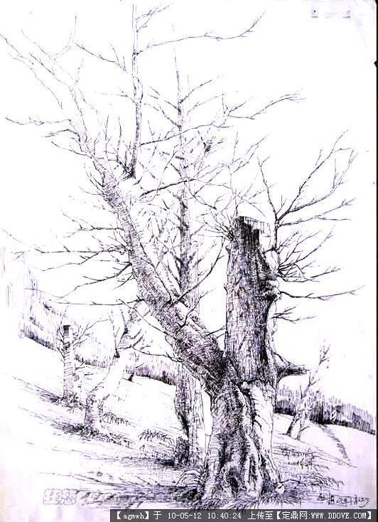室外手绘,钢笔速写(植物景观)-21张