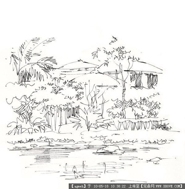 钢笔速写(植物景观)-21张的图片浏览