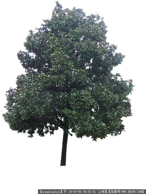定鼎网 定鼎素材 配景素材 园林植物 常用树木-很好的ps树木素材  8