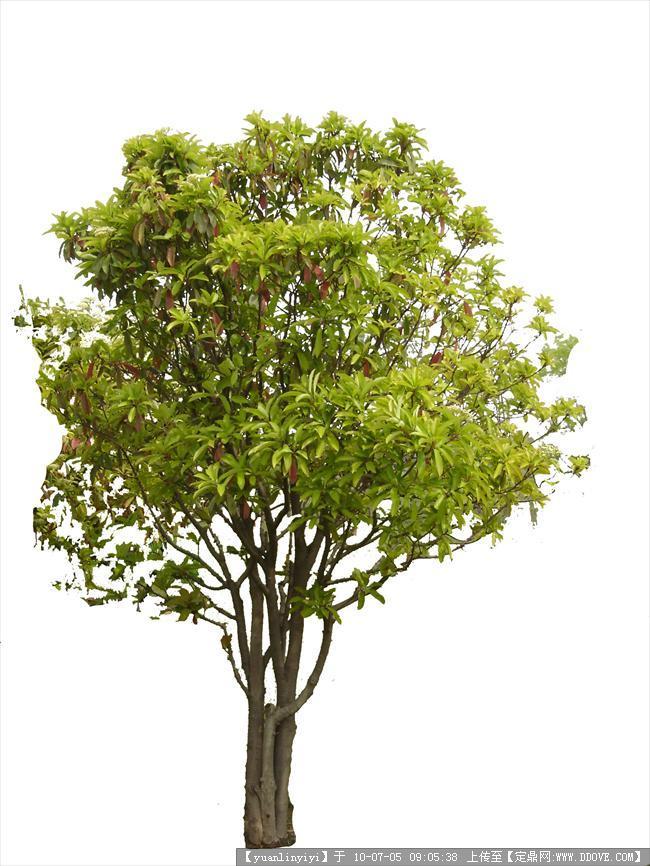 常用树木-很好的ps树木素材