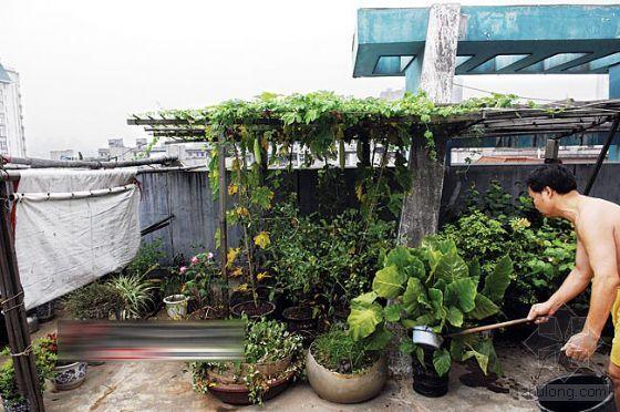 屋顶盆景园设计