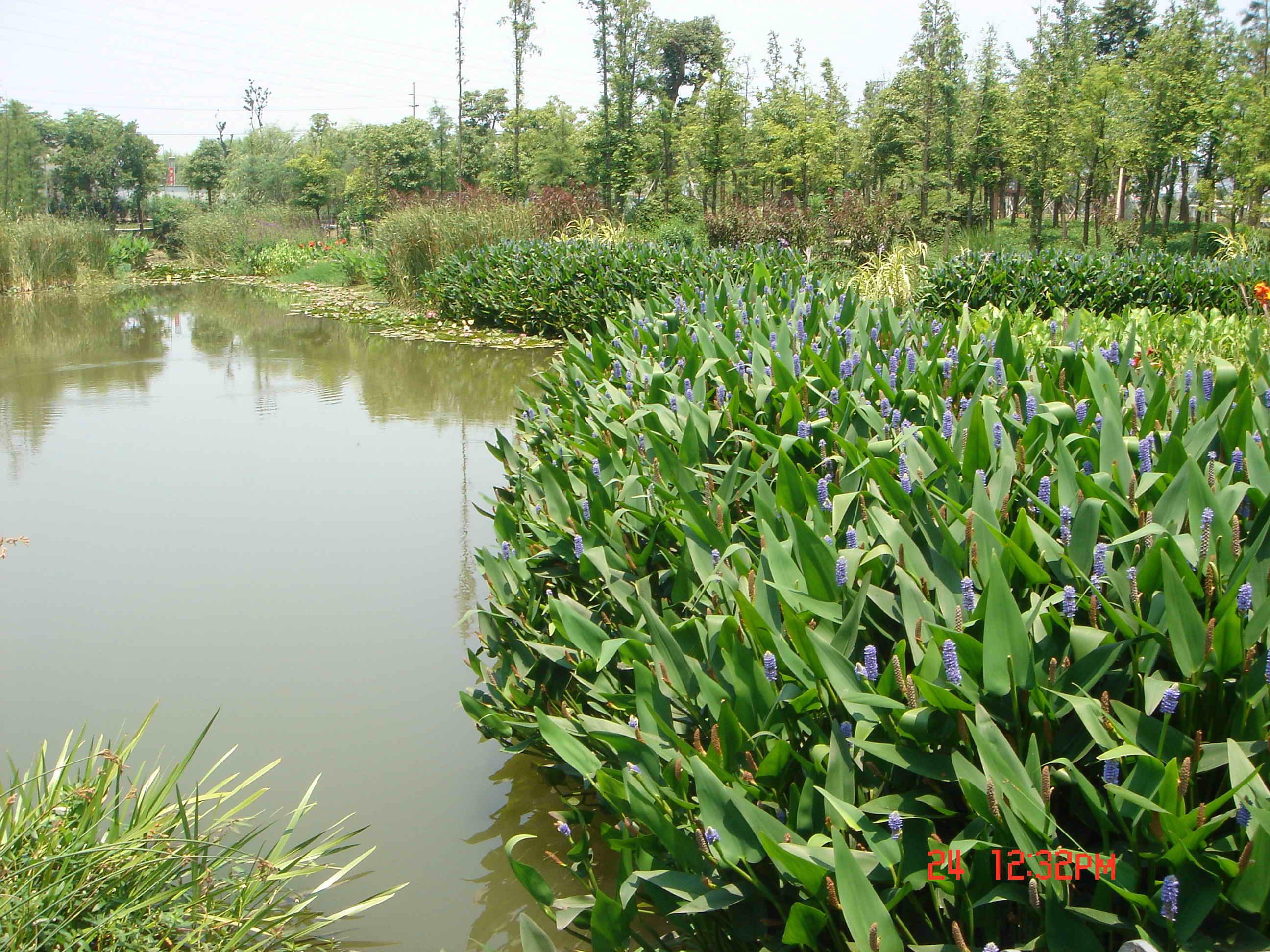 湿地景观3 水秀江南 论宁波日湖公园水景设计 高清图片