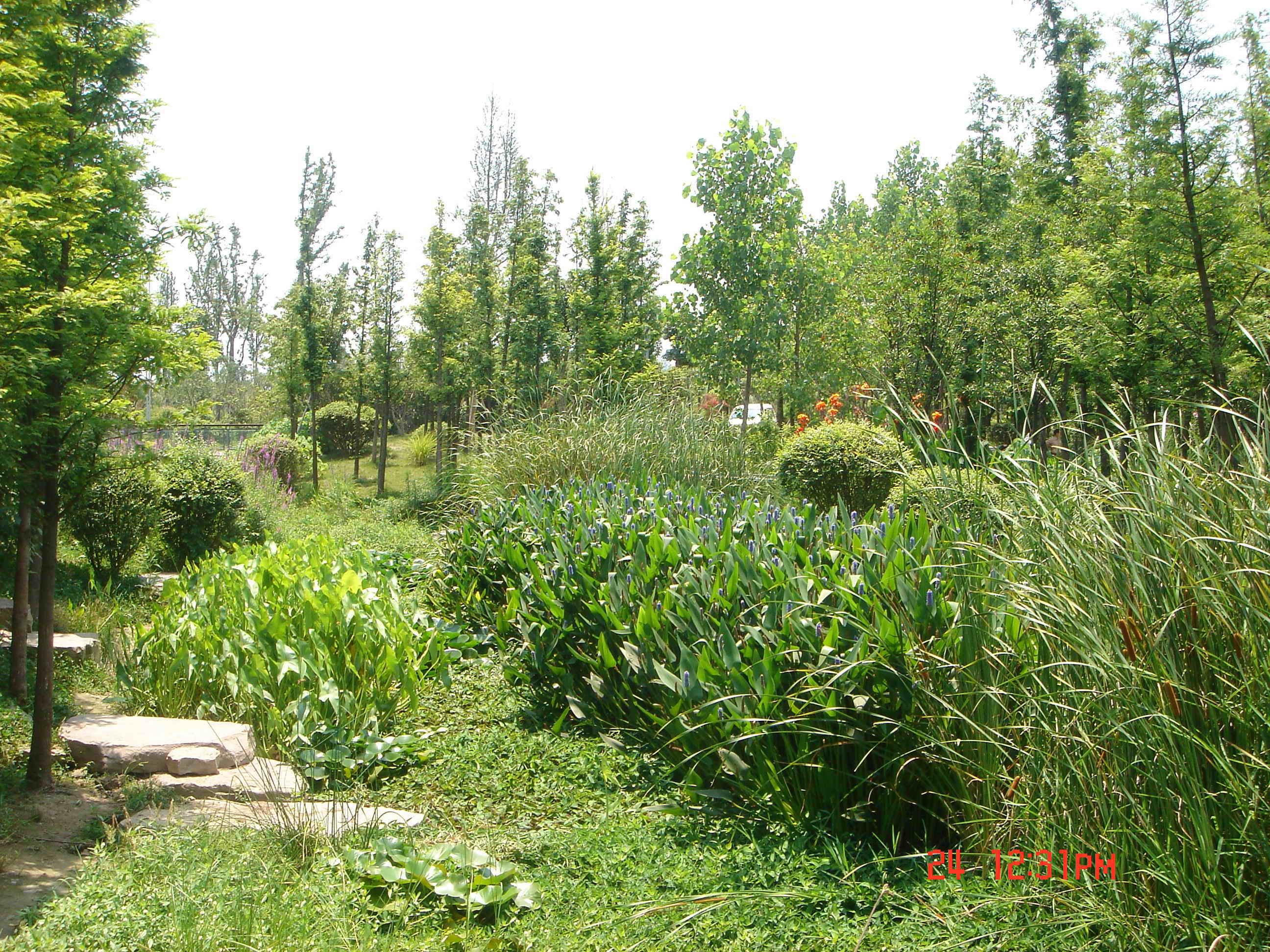 湿地景观5 水秀江南 论宁波日湖公园水景设计 高清图片